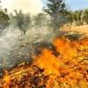 مراتع و جنگلهای مشگینشهر در حال نابودی